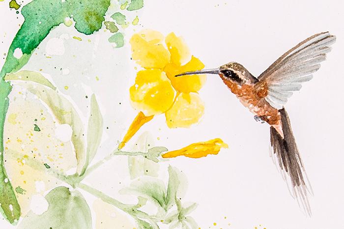 hummingbirds-lu-mori-SFCC-3.jpg