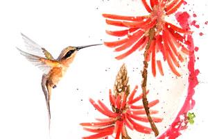 Lu-Mori_hummingbird-brazilianart-1.jpg