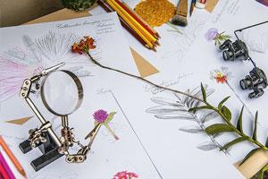 Lu-Mori_diario-de-estudos-botanicos-marco-2.jpg