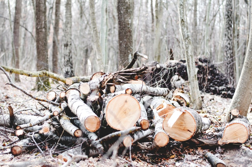 forest-1149663.jpg