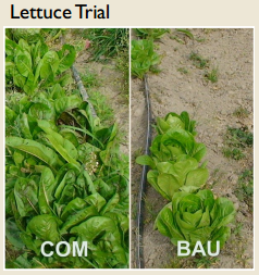 compost_trial.PNG