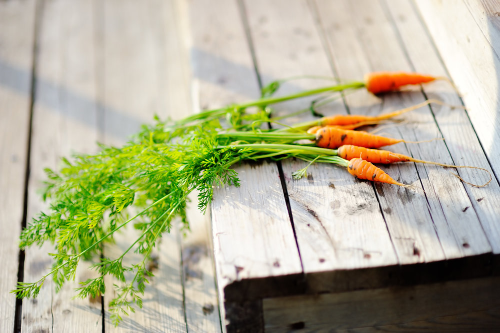 I remember digging up my first crop of home grown carrots.   - B and I planted them when he was somewhere around 18 months old.  I was only a second year gardener then and the yield was such a scrawny one.