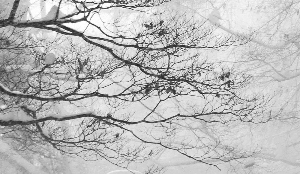 Kristina-Kent-Gardens-Gallery-8.jpg