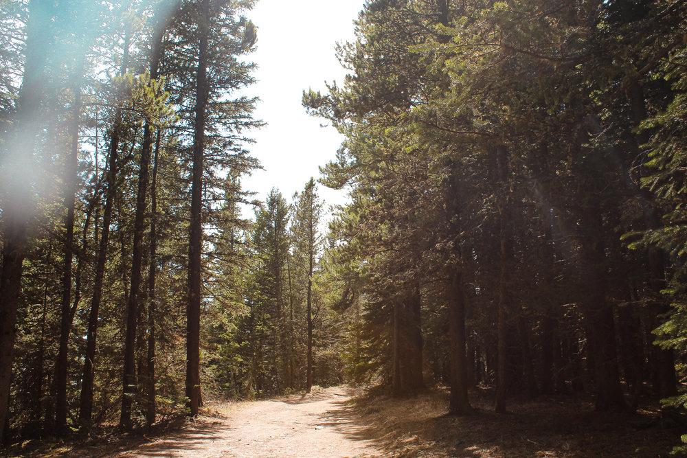 Prairie View Trail Jill Clark photo trees.jpg