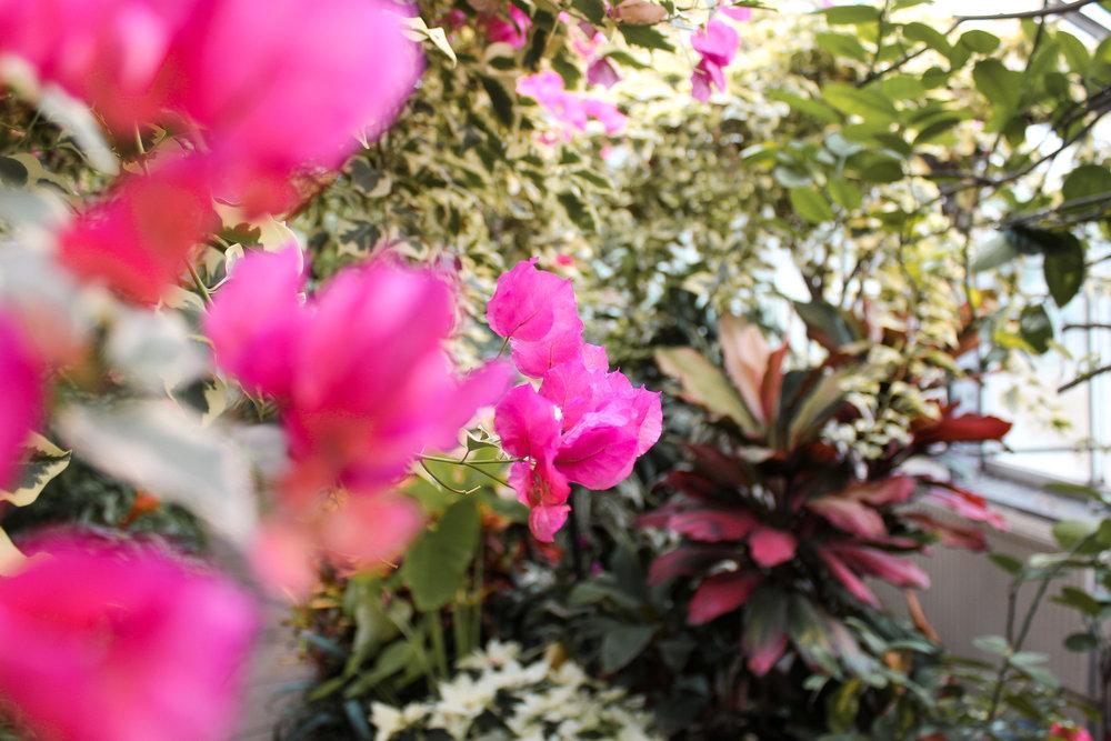 Allan Gardens flowers.jpg
