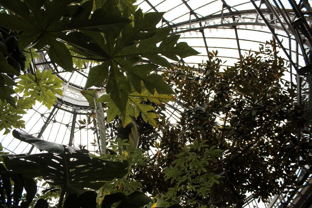 Allan Gardens Palm House.jpg