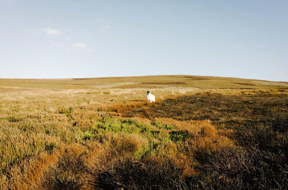 Mountain Biking in Wales-1012.jpg