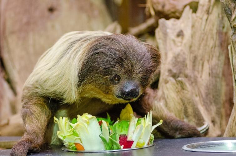 Slow eatin'! TFW Portland