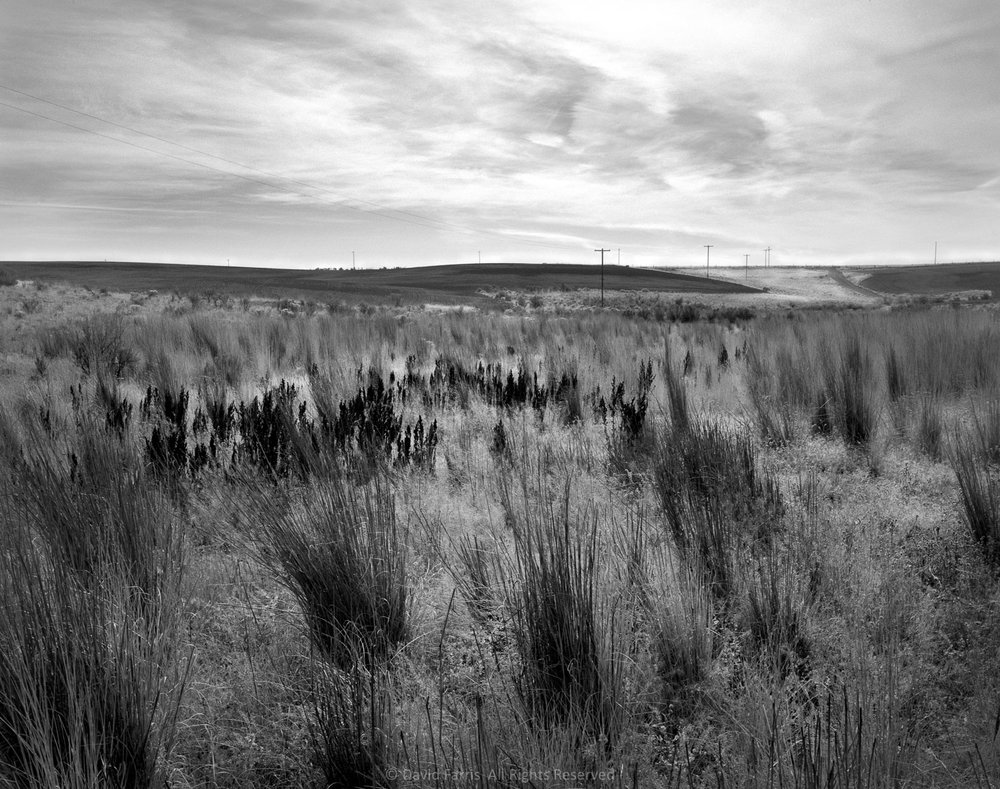 Grasses, Sherman County, Oregon