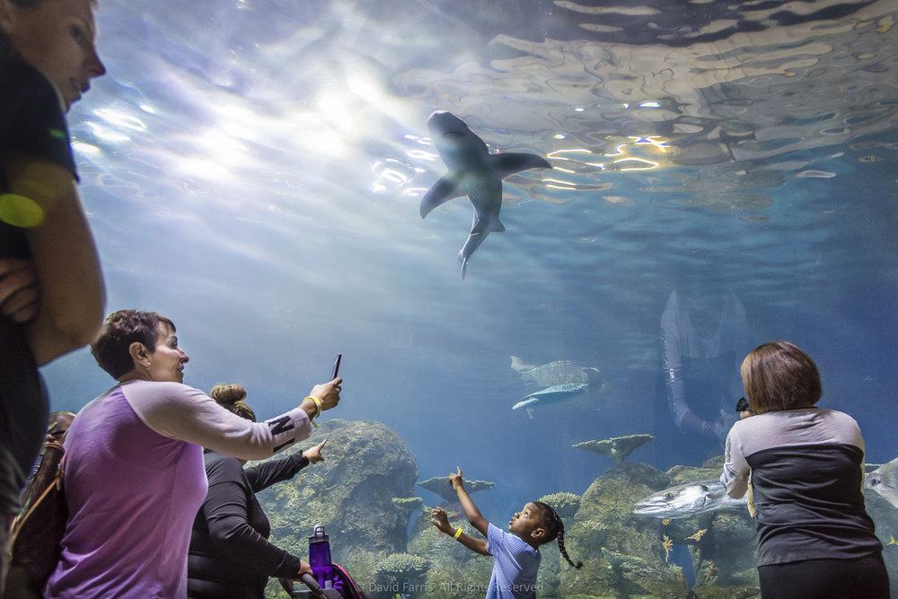 Shark, Denver Aquarium, Denver, Colorado, 2017
