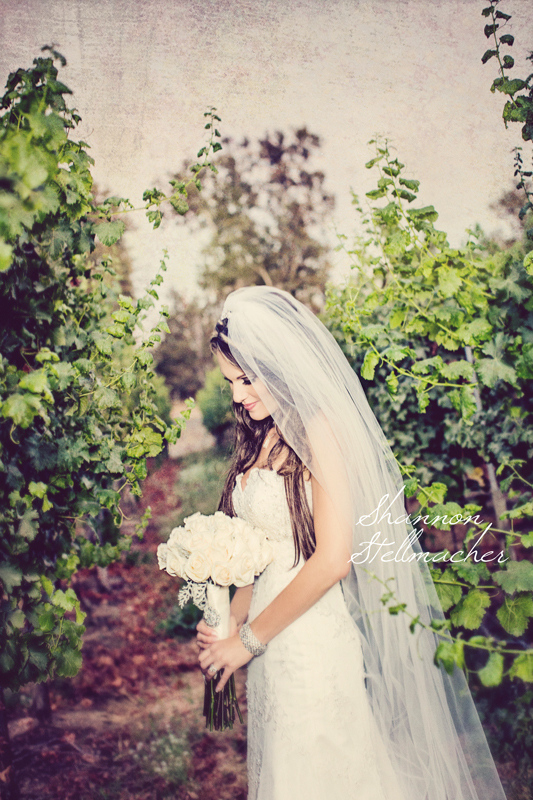 Vineyard-wedding-web.jpg