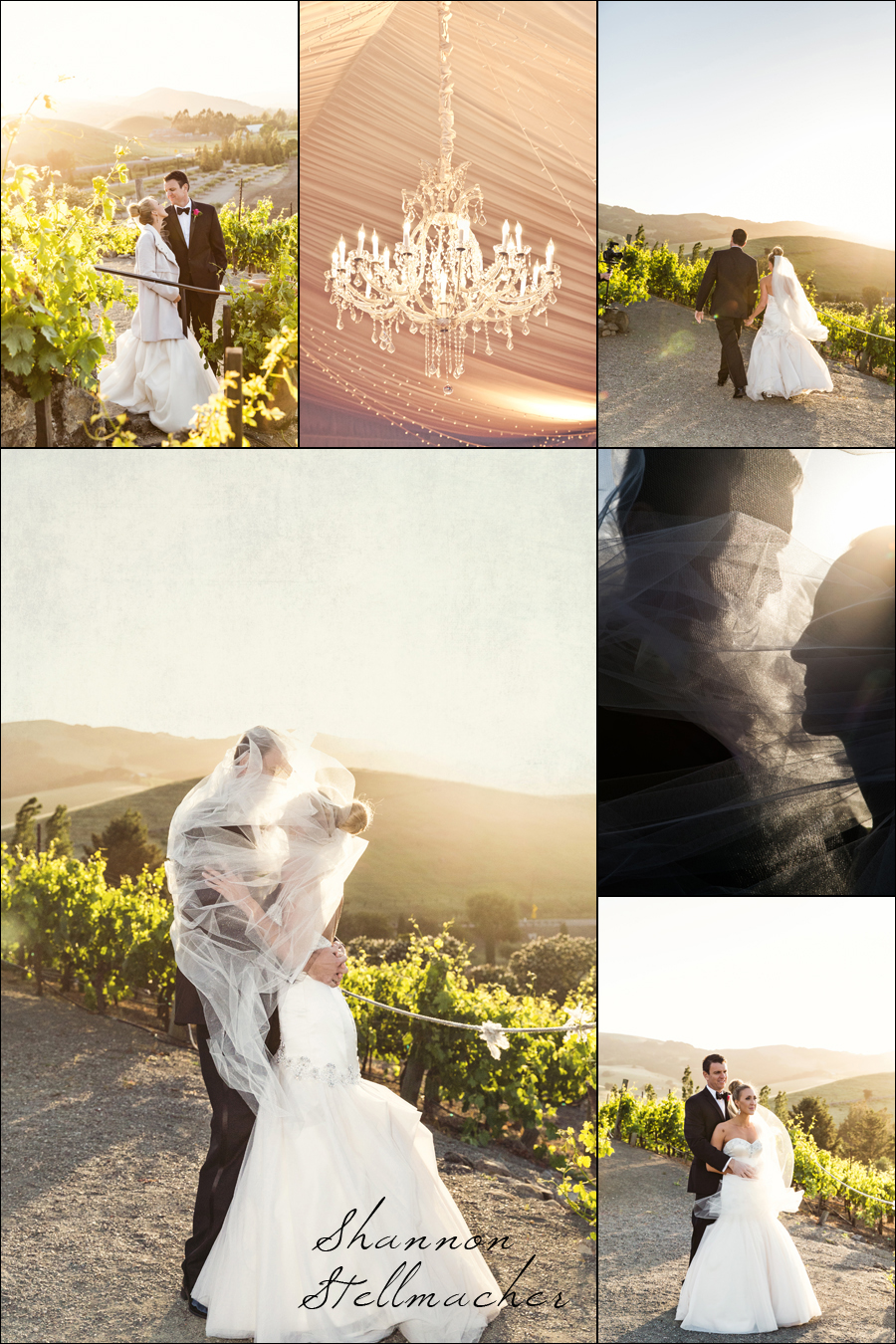 Sonoma Wedding Viansa Winery 1
