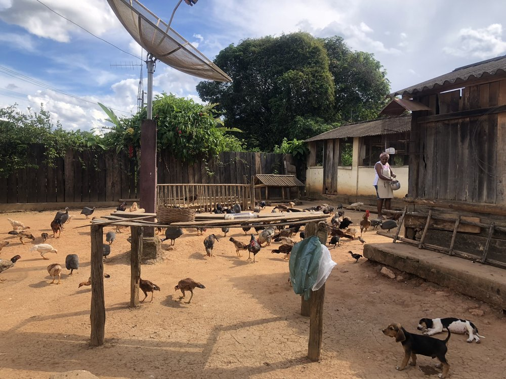 Feeding the chickens! There's dogs, cats, chickens, you name it literally everywhere. Also that table in the front is where they dry all their dishes.