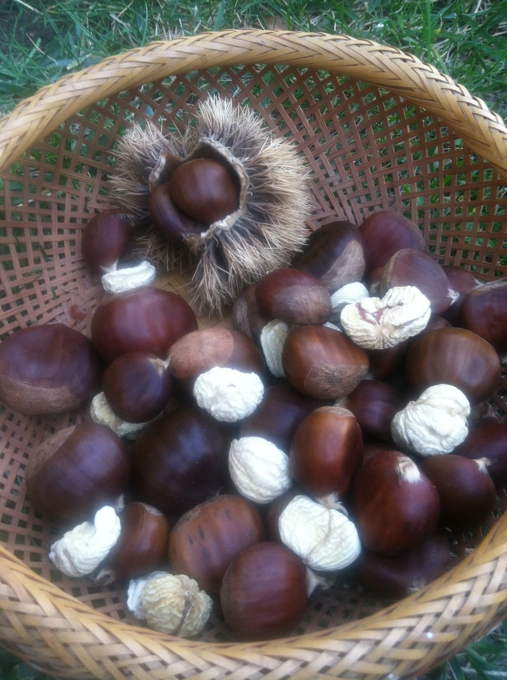 Drying Chestnuts to Add into a Recipe