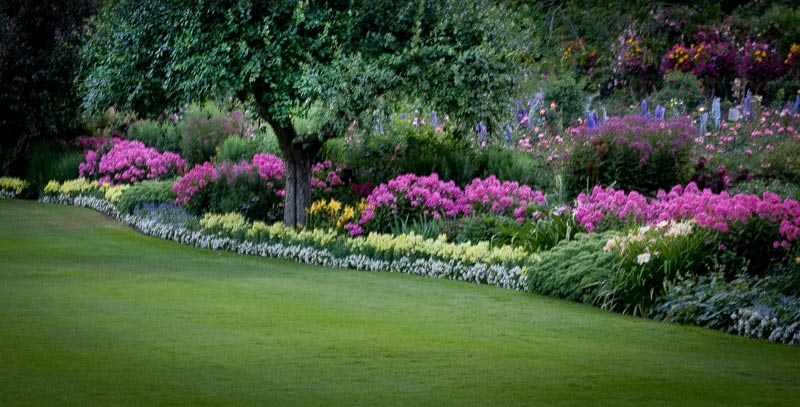lawn-TREES-5.jpg