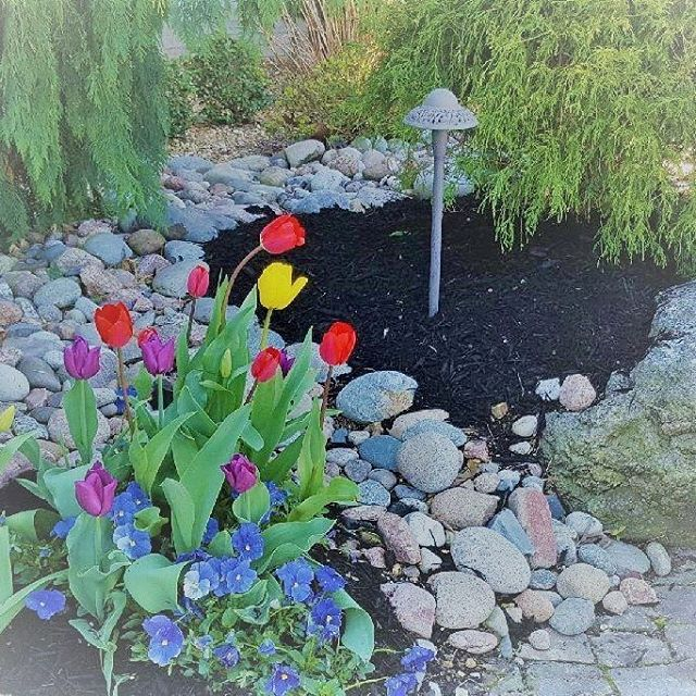 With all the rain in #theozarks it is so nice to go to visit one of our projects and see all the beautiful color and sunshine. #tulips #garden #outdooroasis #outdoorinnovationsfor417land