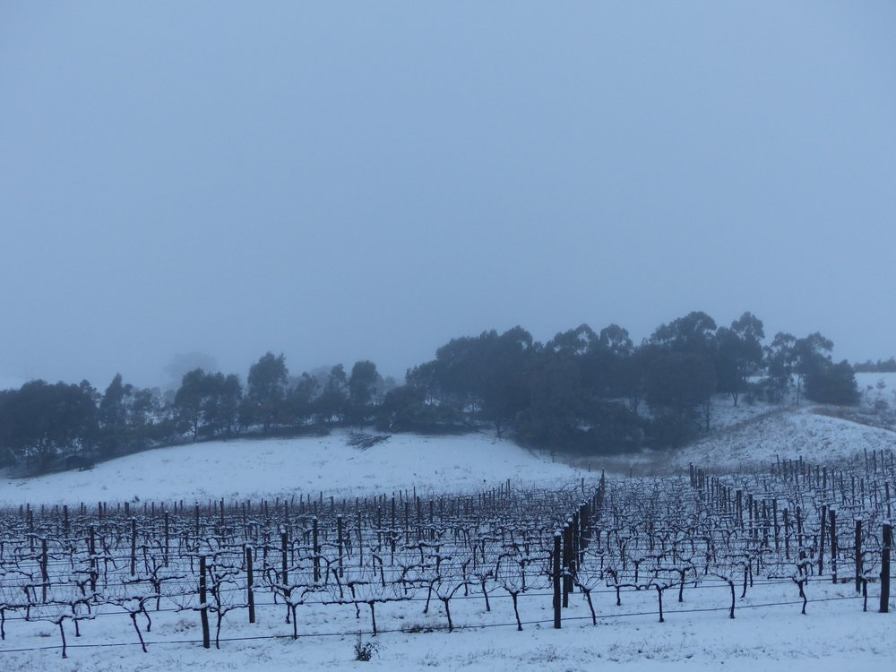 Schubert Vineyard Under Snow