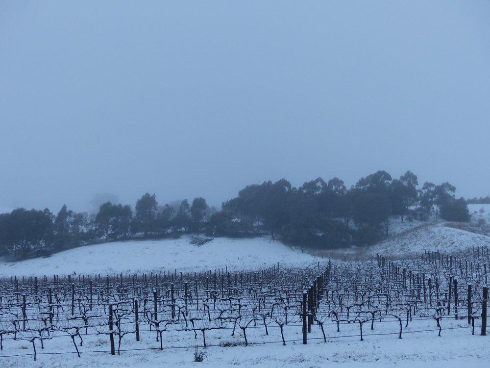 Schubert Vineyard Under Snow