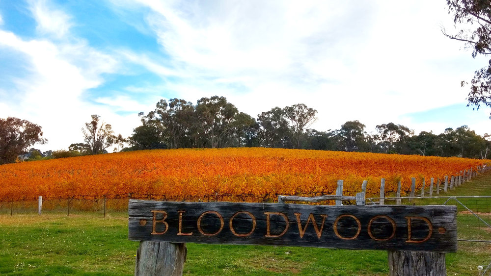 Bloodwood: Orange