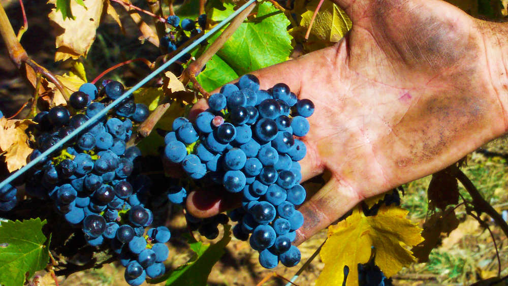 Cabernet Franc Hard Grown