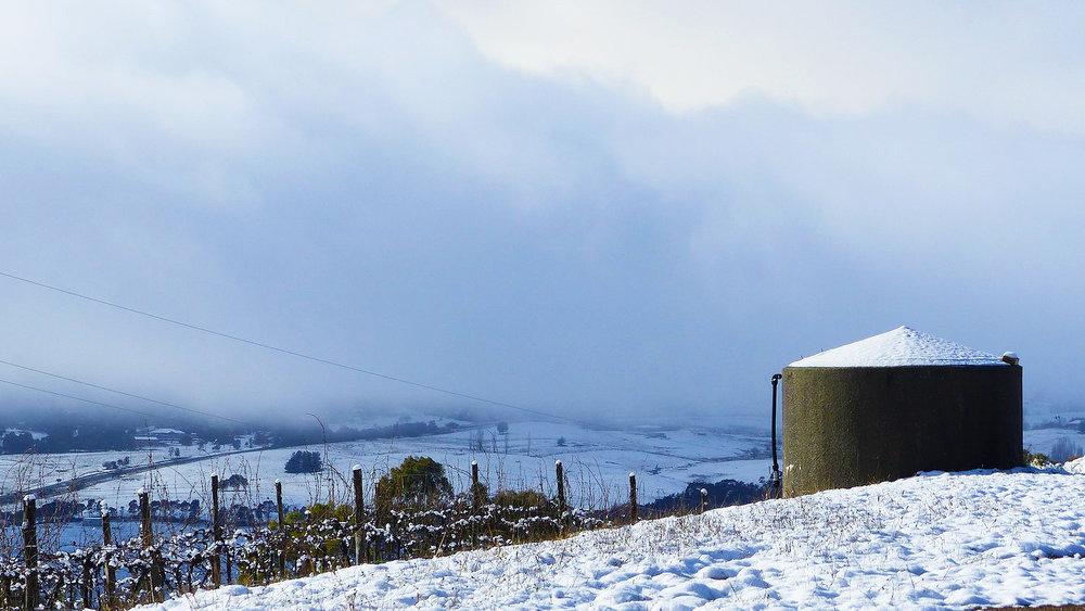 Riesling Vineyard Under Snow