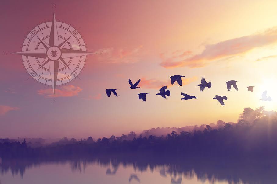 Balance + Harmony - The power of holistic wellness.
