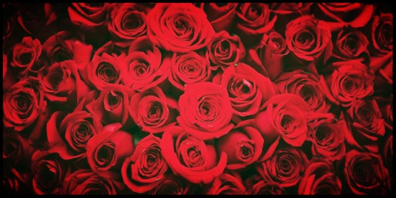 Red-Roses-02.jpg