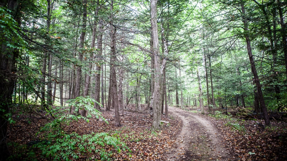 Hiking Trails!