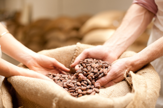 cocoa beans.png