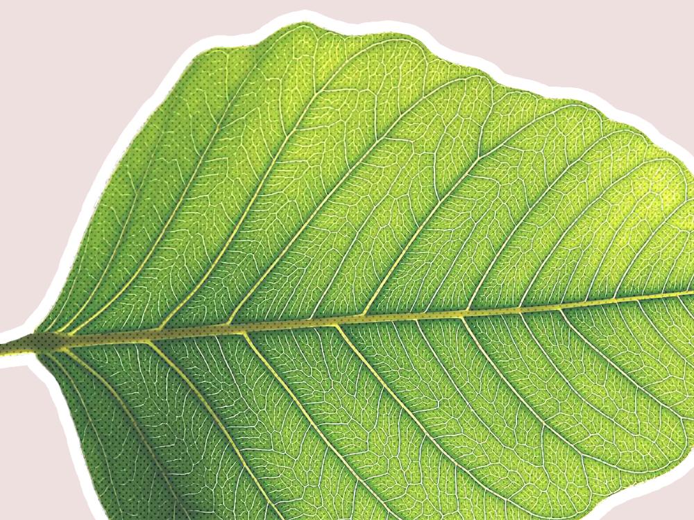 Leaf_1_web.png