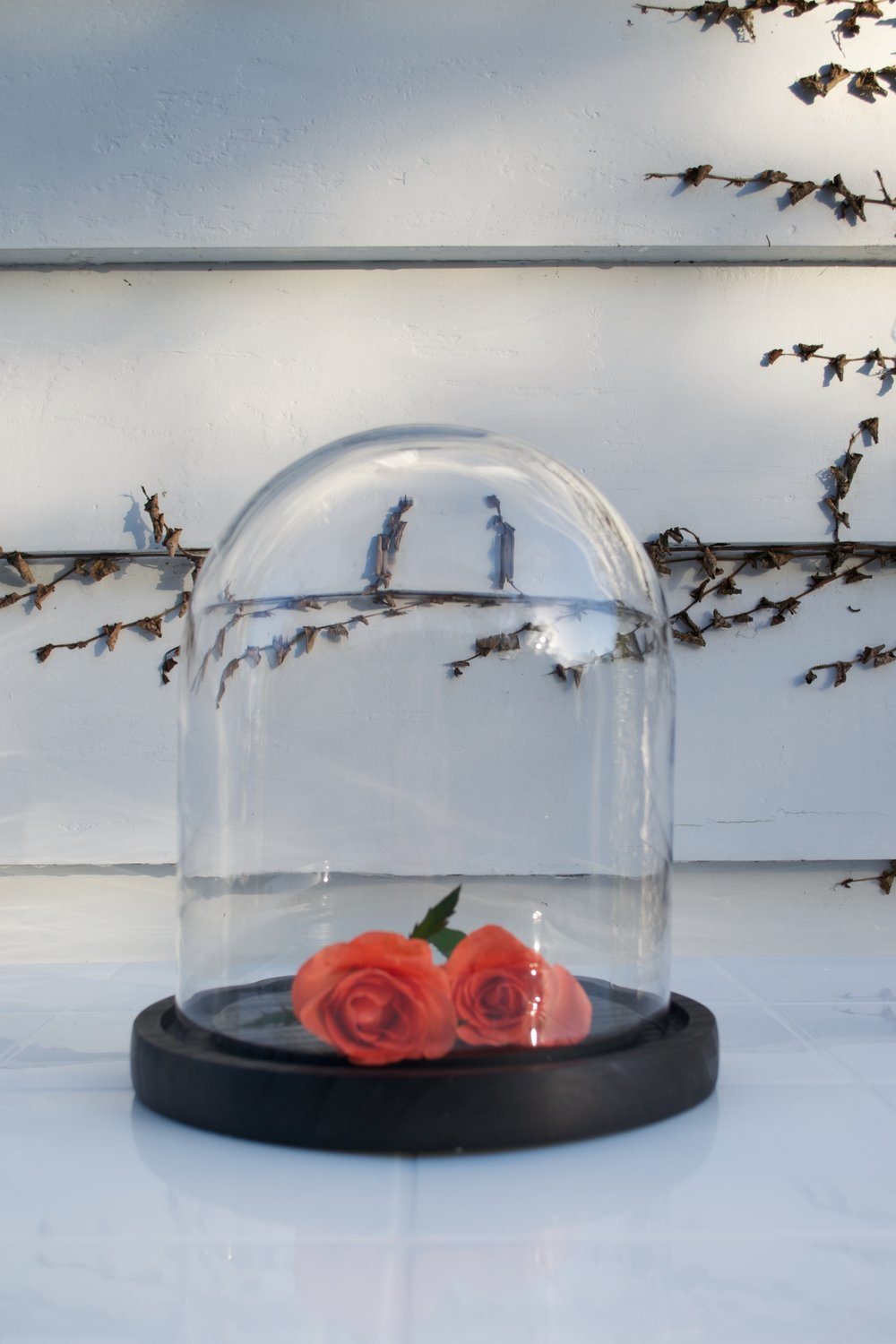 glass dome with wooden base x1 $10