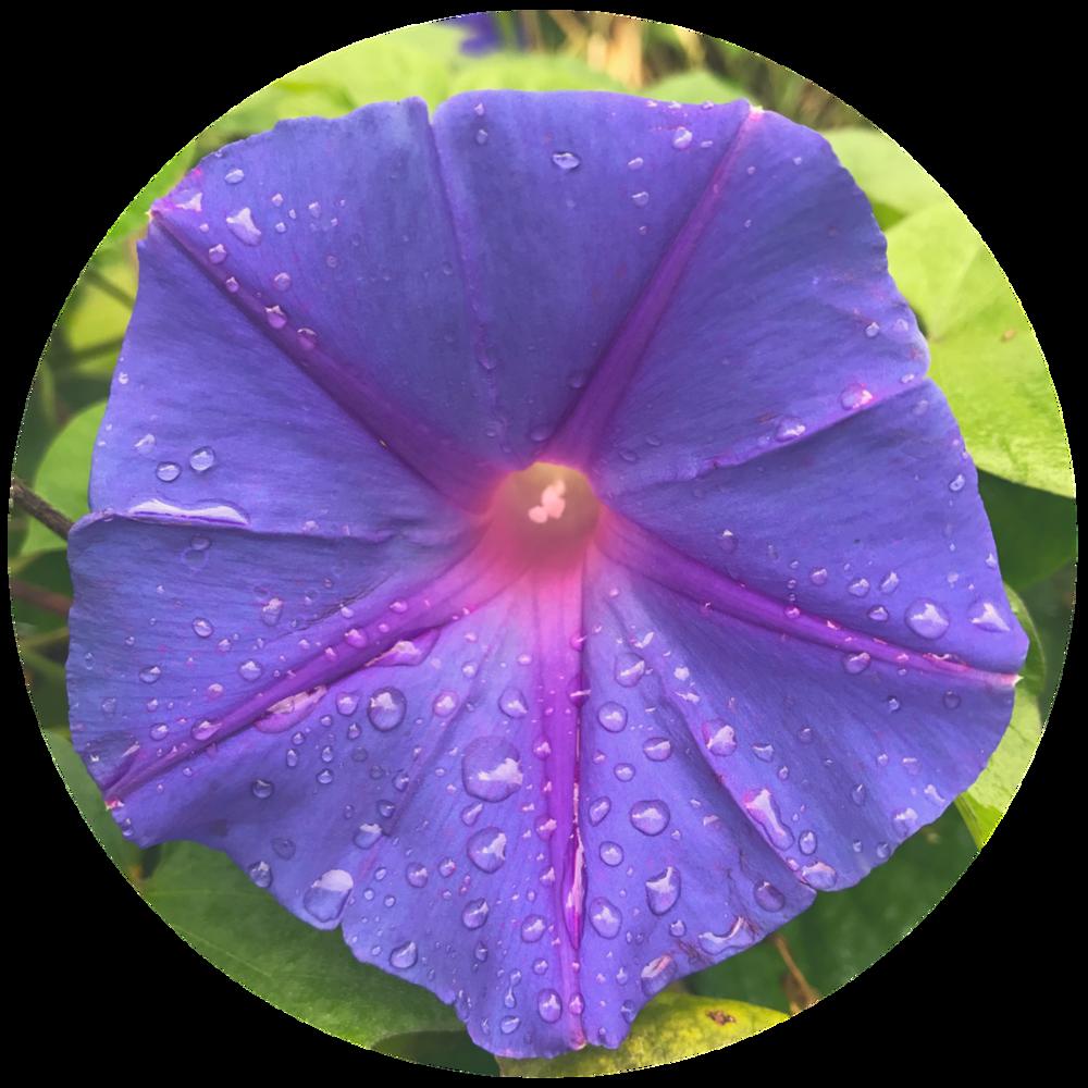 round flower.png