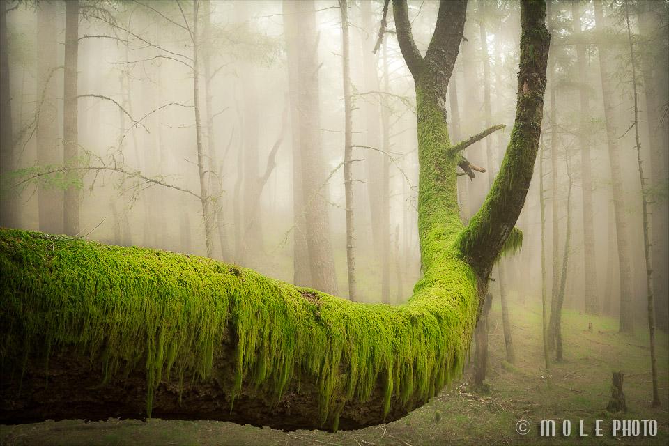 Landscape-Nature-1.jpg
