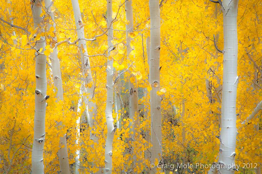 Landscape-Nature-99.jpg