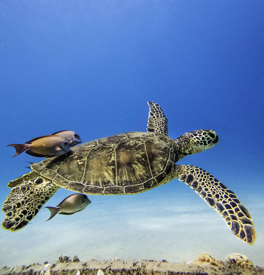 instagram turtle.jpg