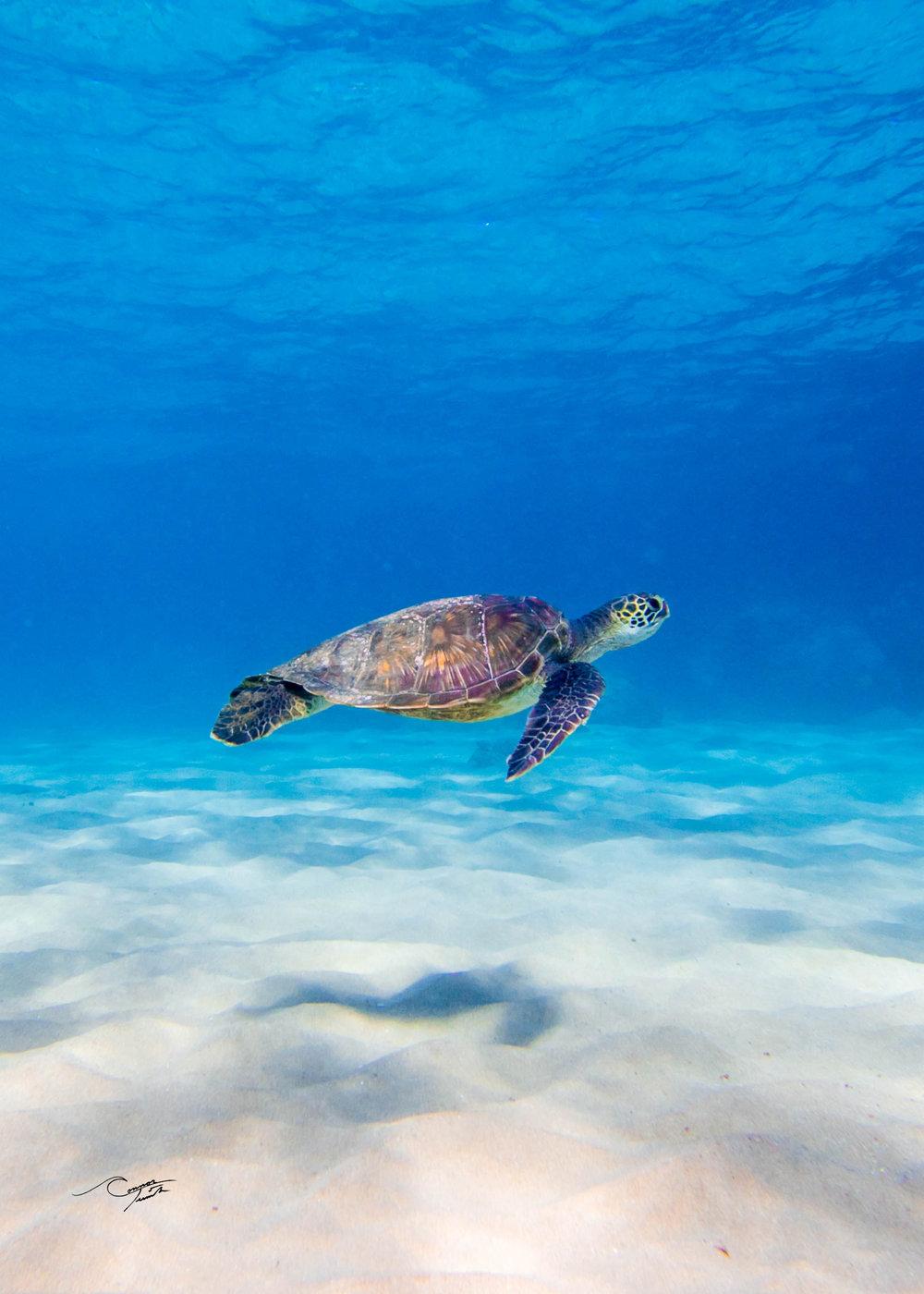 turtle 5x7.jpg