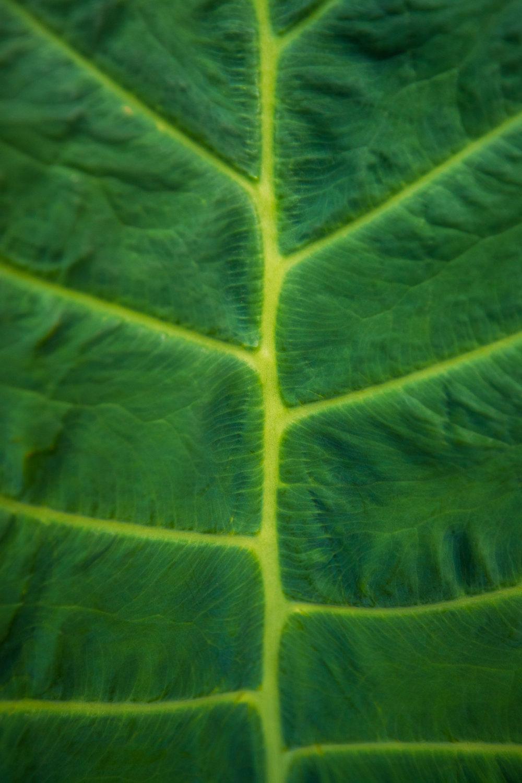 Macro photography Hawaiian palm