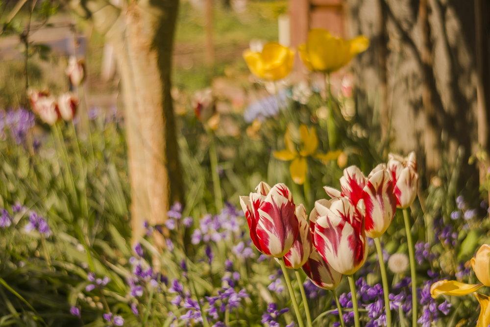 Gorgeous gardens 05.jpg