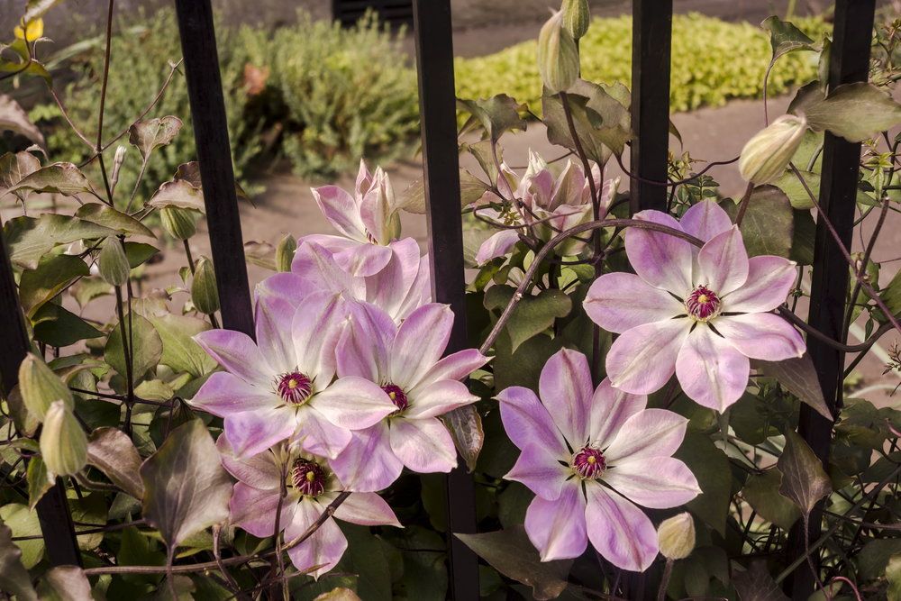 Gorgeous gardens 14.jpg