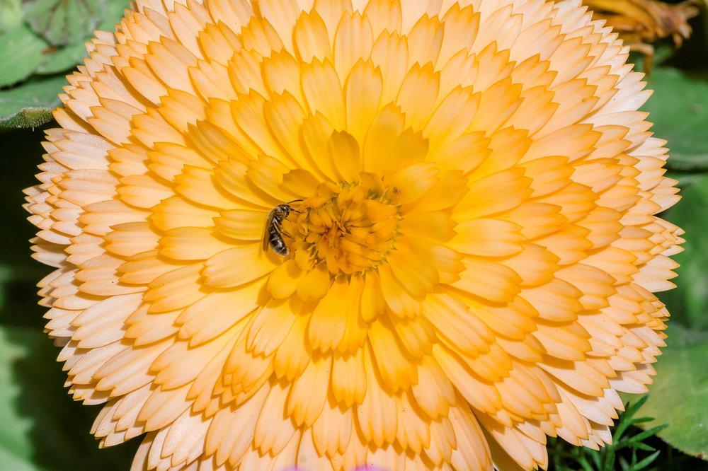 Gorgeous gardens 07.jpg