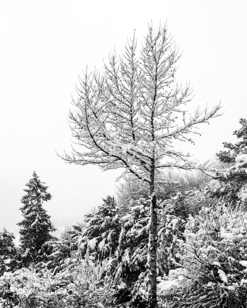 Winsley in Winter 06 M.jpg