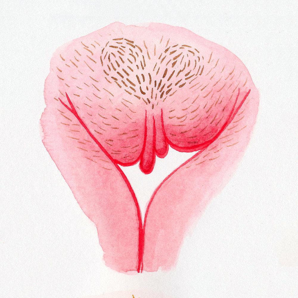 Vulva Gallery Pink42.jpg