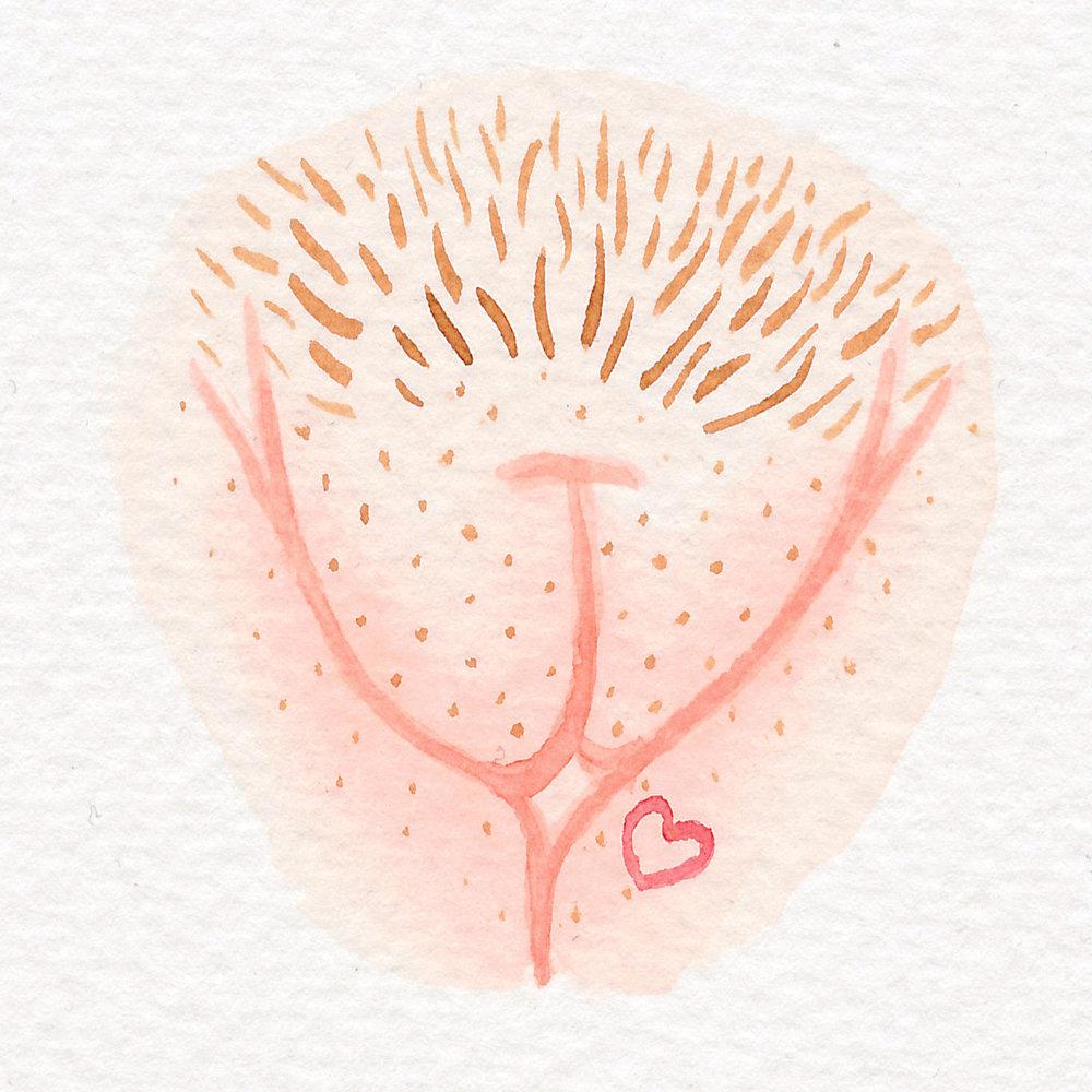 Vulva Gallery Pink78.jpg
