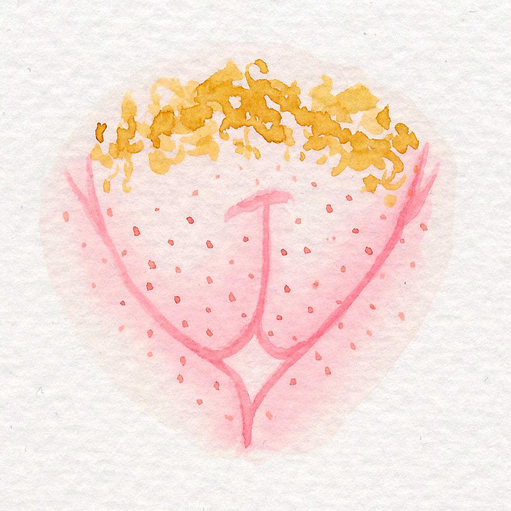 Vulva Gallery Pink73.jpg
