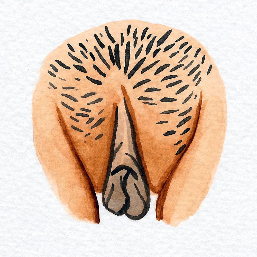 Vulva Gallery Brown168.jpg