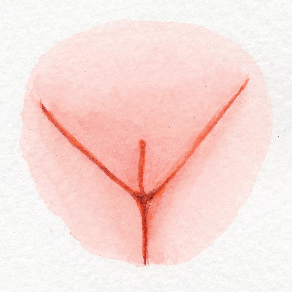 Vulva Gallery Pink146.jpg