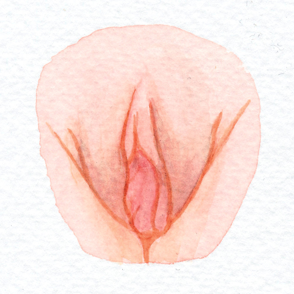 The Vulva Gallery - Vulva Portrait #4.jpg