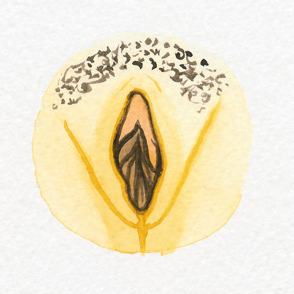 Vulva Gallery Yellow104.jpg