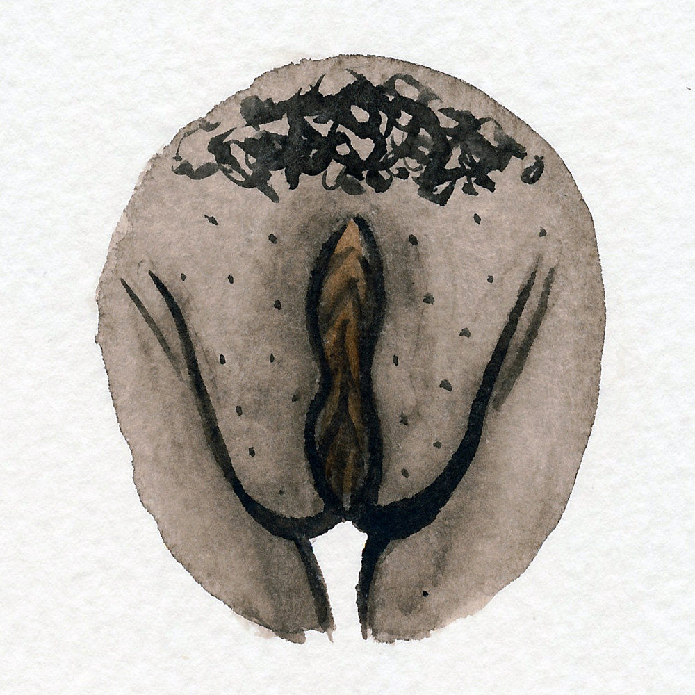 Vulva Gallery Brown202.jpg