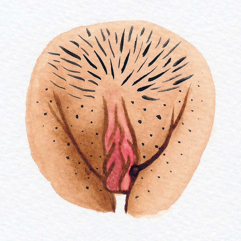 Vulva Gallery Brown118.jpg